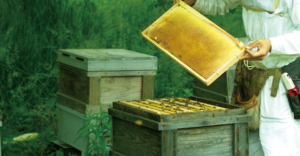ミツバチは、いのちをつなぐ担い手。はちみつを楽しむことは、自然の循環を支えます。