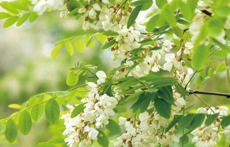 季節の花々から採蜜